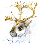 Reindeer watercolor T-shirt graphics,. Reindeer illustration with splash watercolor textured background. Stock Photography