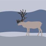 Reindeer in winter mountains. Vector Stock Image