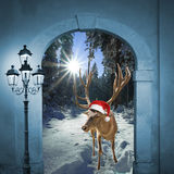 Reindeer in winter wonderland, christmas design. Reindeer with santa cap in winter wonderland, christmas design Royalty Free Stock Photo