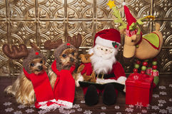 Reindeer yorkshire terrier dogs Stock Photos