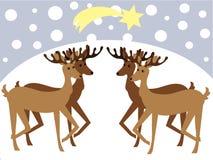 Reindeers Stock Photo