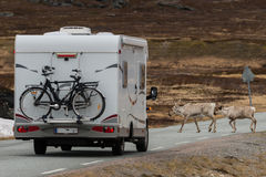 Reindeers crossing the street in front of mobile home Royalty Free Stock Photos
