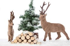 Reindeers Living Room Royalty Free Stock Photo