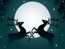 Reindeers at night Royalty Free Stock Photography