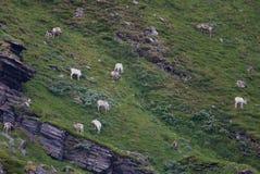 Reindeers in Norway Stock Images