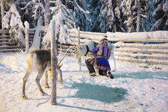 Reindeers and Suomi man in Ruka in Lapland in Finland Stock Photo