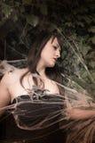 Reine d'araignée II Photographie stock libre de droits