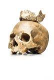 Reine de crâne avec une couronne de mâchoire Photo libre de droits