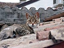 Reine des toits Image libre de droits