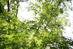 Reine grüne Blatt-Anlage lizenzfreie stockfotos