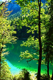Reine grüne Natur Stockbilder
