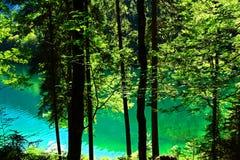 Reine grüne Natur Lizenzfreies Stockfoto
