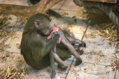 Reine Liebe zwischen dem Affen und dem Baby Stockfotografie