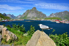 Reine Lofoten Royalty Free Stock Photo