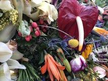 Reine Schönheit: Blumen in Medellin lizenzfreie stockfotos