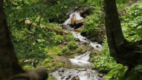 Reine Spekulation des kleinen Waldwasserfalls stock footage