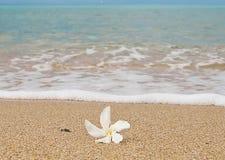 Reine weiße Blume im Sand in dem azurblauen Meer Lizenzfreies Stockfoto