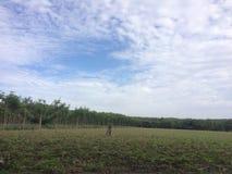 Reiner Himmel des Naturfreien raumes in der Landschaft stockfotografie