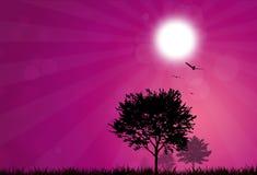 Reiner Sonnenaufgang Lizenzfreie Stockfotos