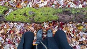 Reines Michigan-Waldland Lizenzfreies Stockbild