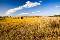Reinigung der Getreide Lizenzfreies Stockbild