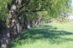 Reinigung mit Gras und Bäumen stockbild
