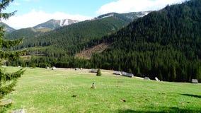 Reinigung und Berge in Zakopane Lizenzfreies Stockfoto