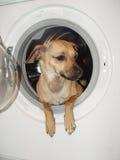 Reinigung und Hund stockbild