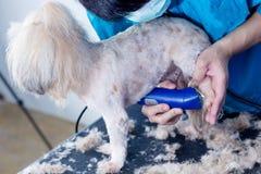 Reinigungshundezecken in den Ohren des Hundes lizenzfreie stockfotografie