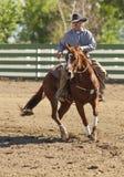 Reining Horse Rider Stock Image