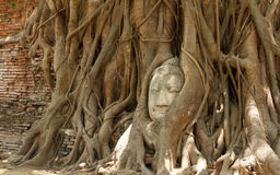 Reino de Ayutthaya, Tailândia Fotos de Stock Royalty Free