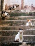 Reino del gato Imagen de archivo libre de regalías