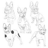 Reinrassiger Hund in den verschiedenen Haltungen übergeben gezogene Skizzen Stockbild