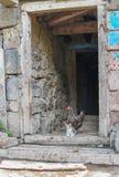 Reinrassiges Huhn mit Kätzchen Stockbild