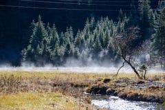 Reinweißnebelfluß unter die Kiefern, Jiuzhaigou, Sichuan, China Stockfotografie