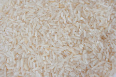 Reis Stockfoto