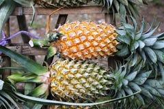 Reis aan Azië: ananassen Stock Afbeelding