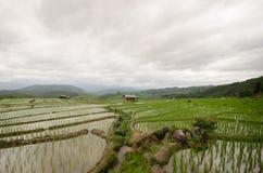 Reis archivierte Terrasse in der Erntezeit Lizenzfreies Stockbild