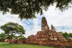 Reis in ayutthaya oude stad Stock Afbeeldingen