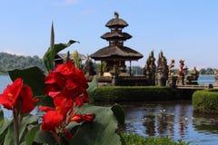 Reis Bali Stock Afbeelding