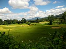 Reis-Bauernhof in Pua, Nan, Thailand Stockfoto
