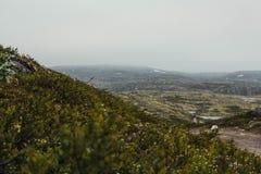 Reis in bergen Royalty-vrije Stock Fotografie