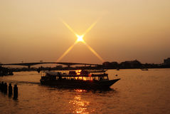 Reis bij zonsondergang Stock Foto