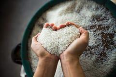 Reis in der Hand Stockbild
