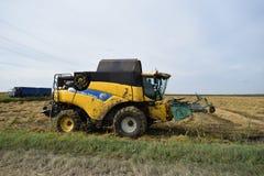 Reis, der krasnodar Region erntet Lizenzfreies Stockbild
