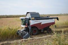 Reis, der krasnodar Region erntet Lizenzfreie Stockfotografie