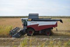 Reis, der krasnodar Region erntet Stockbilder