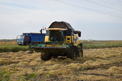 Reis, der krasnodar Region erntet Lizenzfreie Stockfotos