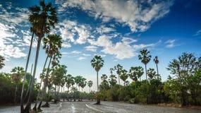Reis, der in Thailand, in der Zeitspanne, im Ackerland und im Zuckerkumpel bewirtschaftet Lizenzfreies Stockbild