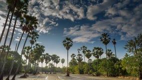 Reis, der in Thailand, in der Zeitspanne, im Ackerland und im Zuckerkumpel bewirtschaftet Stockfoto